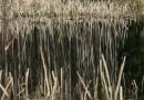 Bagno Jacka - wiosna 2007