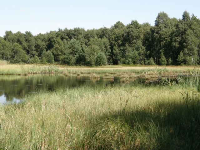 Bagno Jacka - sierpień