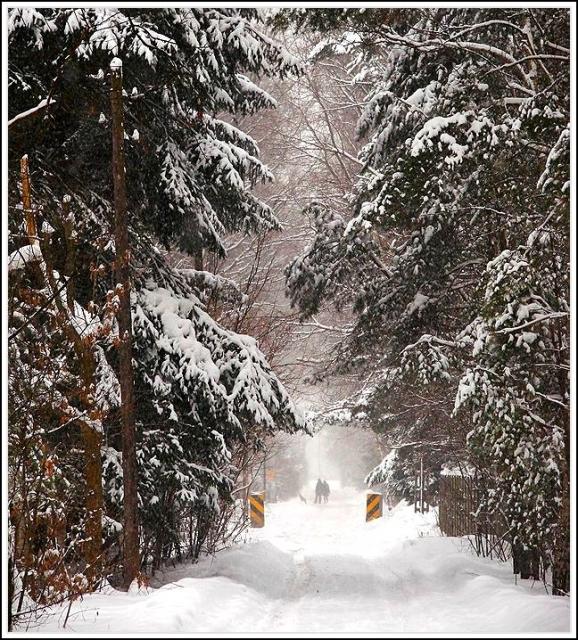 zimowa Torfowa