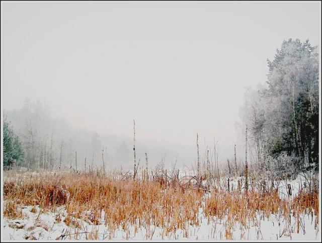 zimowe bagna