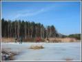 lodowisko na bagnach