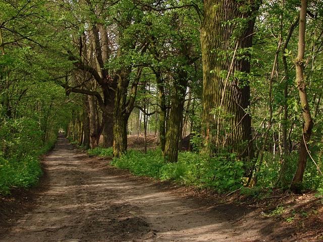 ul, Fabryczna w lesie