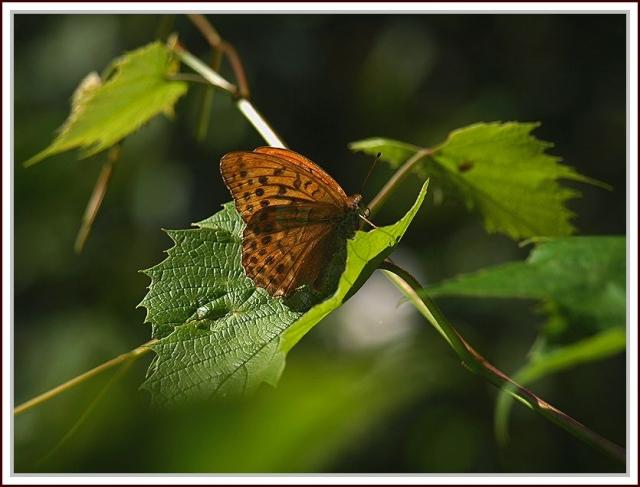 foto przyroda oś, Stara Miłosna