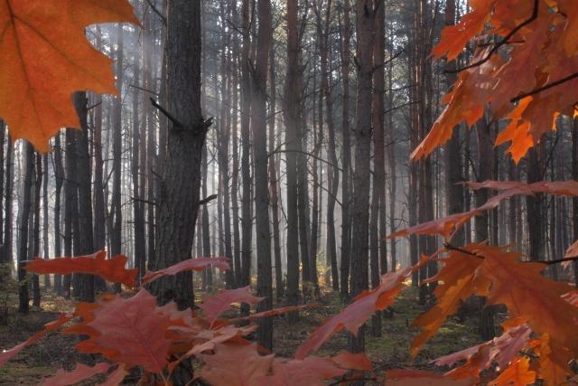 Jesień na groszówce