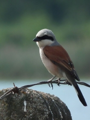 Europejskie Dni Ptaków w Wesołej